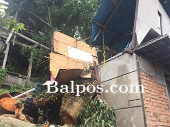 Dampak Pohon Tumbang Gang Kenanga